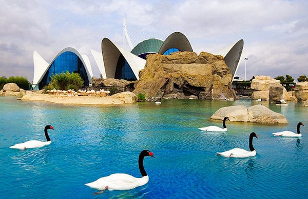 Calatrava's architectural wonders in the City of Arts and Sciences