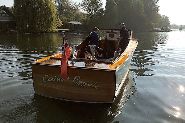 """Doggies enjoying a day out on """"Casino Royale""""."""