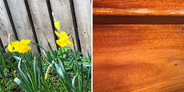 Real HSC daffodils in their natural habitat (left) - The varnish is flowing abundantly (right)