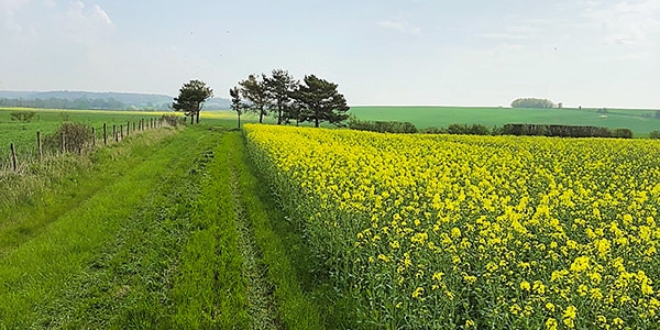 Littlestoke Manor Farm is surrounded by beautiful fields and wildlife.