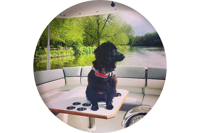 Willow on board 'Xanadu', a recent import from Windermere.